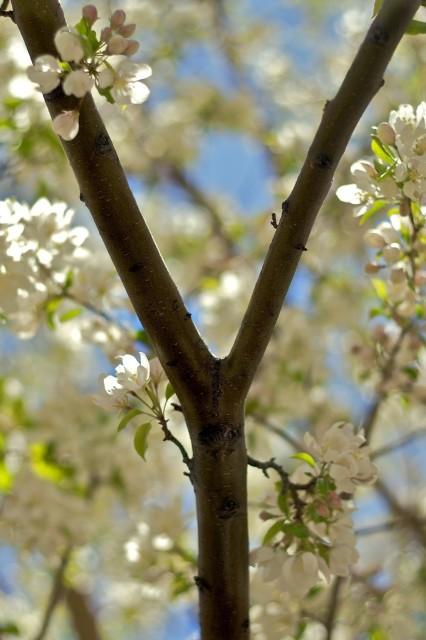 Y Tree.jpg