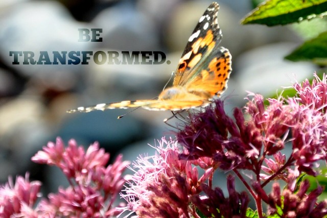 BE TRASNFORMED, butterfly