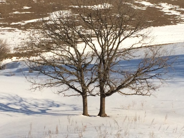 the tale of two trees tellhisstory guest post by scott lee